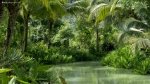 9 HOURS Rainforest │ Deep Jungle Sounds - Natural sound of a rainforest for relaxation, yoga, SPA