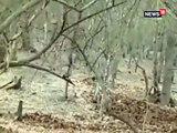 गिर के जंगल शेर ओर कुत्ते के बीच हुई लड़ाई, देखिए VIDEO