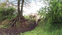 Coup dur pour les éleveurs français mis à la diète par l'UE