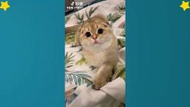 Cute Cats Videos Compilation Cute Moment Of The Cats – Cutest – Funniest Animals! #4