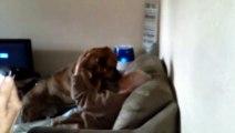 Ce chien montre tout son amour à cette vieille dame. Trop mignon !