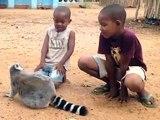 Un lémurien adorable reclame des calins à ces enfants... Trop mignon