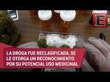 Reino Unido permite e uso de la marihuana con fines medicinales