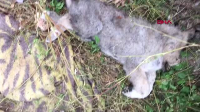 Uşak'ta Parçalanmış Halde 5 Ölü Köpek Yavrusu Bulundu
