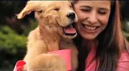 Reunión tras separación de tu perro El Hombre que Escucha a los Perros