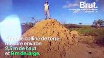 Un immense réseau de tunnels sous-terrains construit par les termites