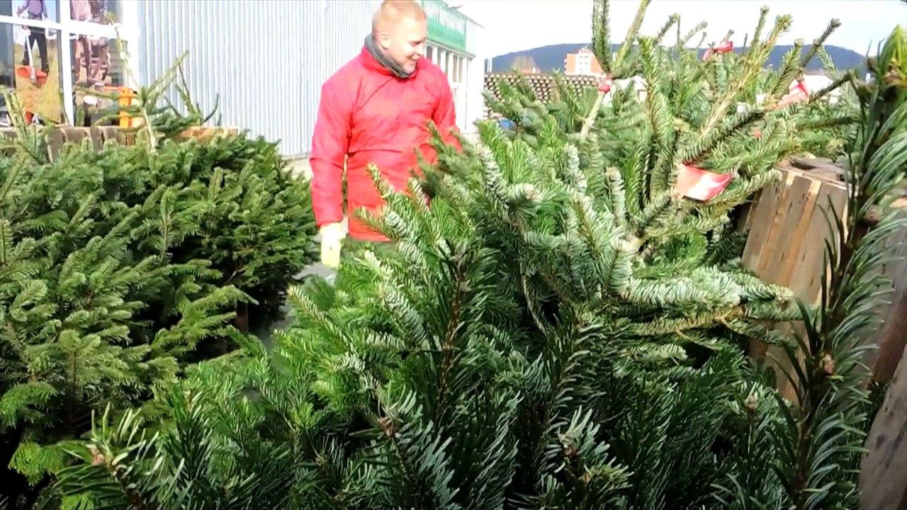 Predaj vianočných stromčekov je už v plnom prúde