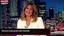 Découvrez la plus grosse vache d'Australie (vidéo)