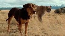 A DOG'S WAY HOME – International Trailer (VO)