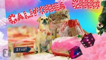 Katy Perry - California Gurls (ft Snoop Dog) - Katy Puppy - California Grrrs   Wide Awoof - Petody