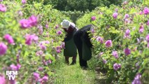 Les savoir-faire liés au parfum de Grasse  entrent au patrimoine culturel immatériel de l'Humanité