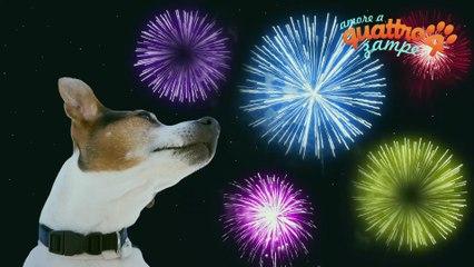 """""""Botti di Capodanno"""": consigli per proteggere i cani"""