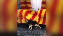 Un chien dans une station de lavage automobile