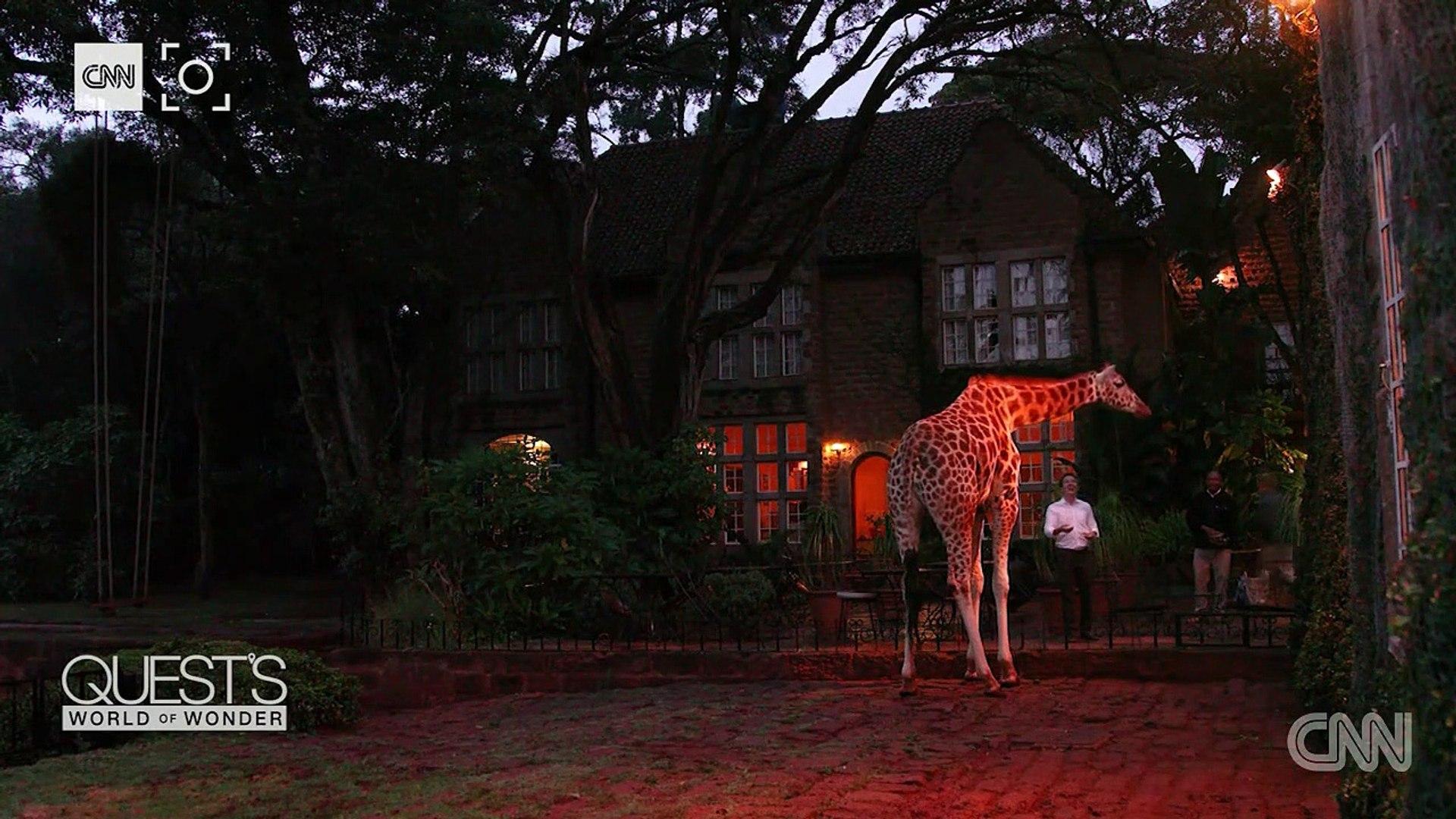 Giraffe Manor: wonderful, weird or both