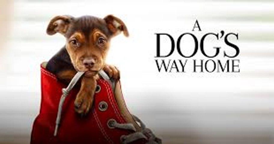 A Dog's Way Home Trailer 1/11/19