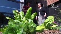 Reportage - Des jardins partagés dans les logements sociaux