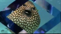 Magnifique poisson Face humaine et longs cils