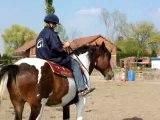 cheval au travail sans mors