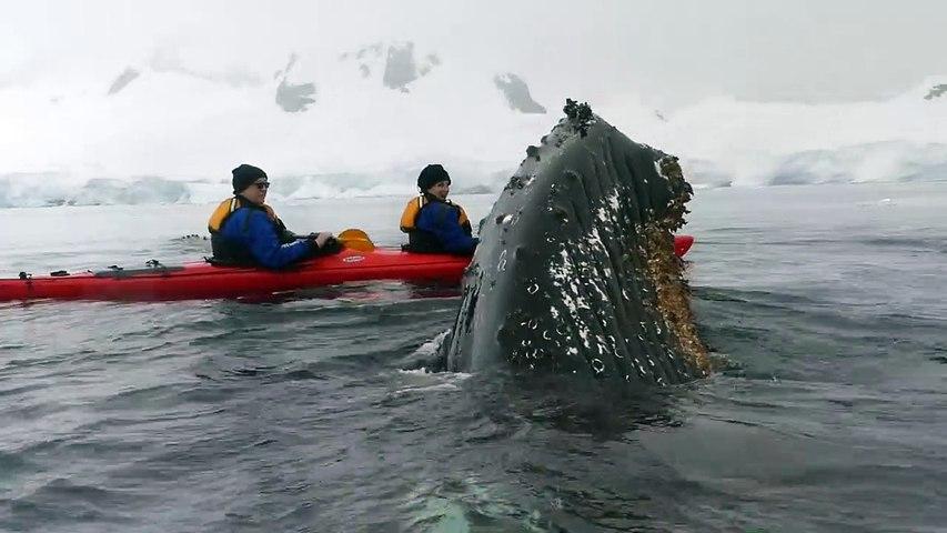 Ballena se acerca de estos turistas en kayak