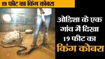 #News ओडिशा के एक गांव में दिखा 19 फीट का किंग कोबरा II 9-feet cobra rescued from house in Odisha