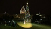 Magical moment U.S. Capitol tree comes to life