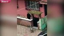 Şiddete uğrayan köpeği vatandaşlar kurtardı