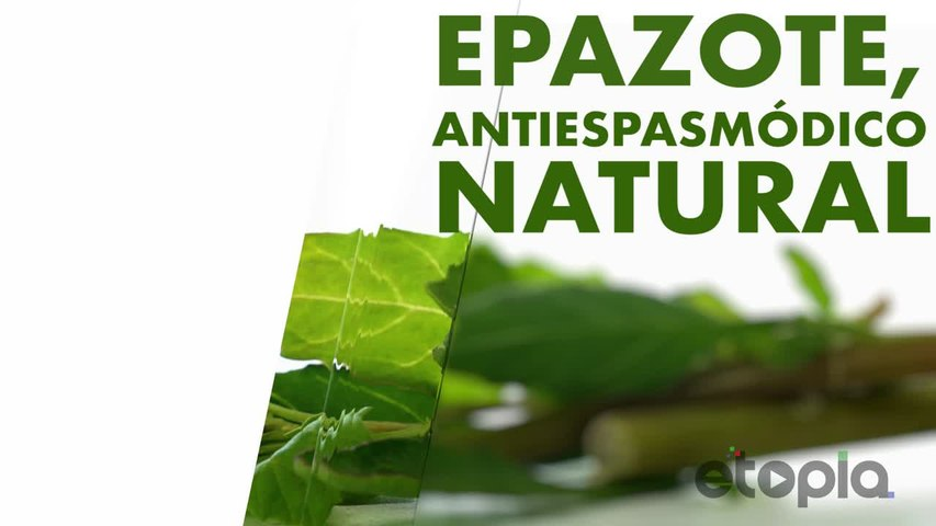 Epazote, antiespasmódico natural