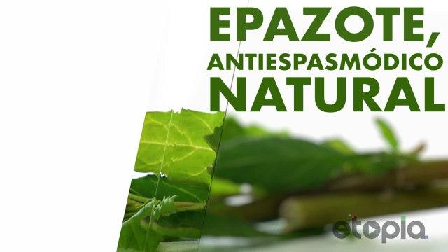Epazote, antiespasmódico natural