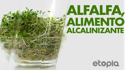 Alfalfa, alimento alcalinizante