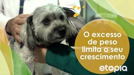 A saúde do seu pet é importante