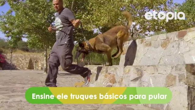 Curte fazer exercícios? Não esqueça levar o seu cachorro.