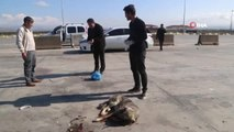 Silopi'de Tırın Çarptığı Köpek Tedavi Altına Alındı