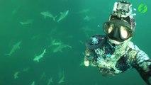 Ce plongeur nage avec des dizaines de requins et dauphins... Magnifique