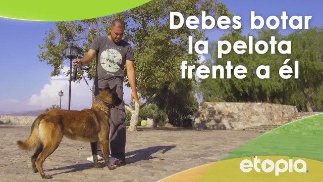 Tips para enseñar a tu mascota a jugar con una pelota