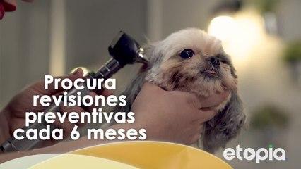 Los cuidados para una mascota feliz