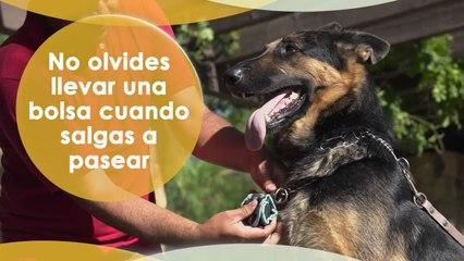 Para un perro amigable, un dueño responsable