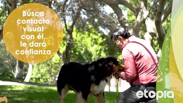 ¿Qué hacer para que tu perro acuda cuando lo llames?