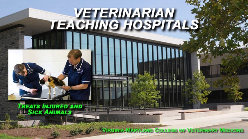 Veterinary Medicne - Fields of Practice