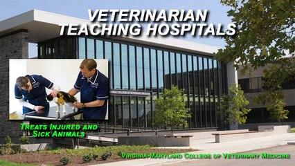 Veterinary Medicne - Fields of Practice