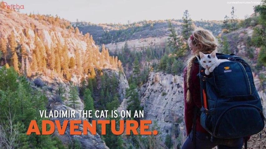 Adventure Cat Travels Through U.S. National Parks