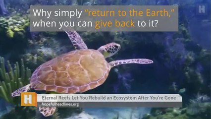 Eternal Reefs Let You Rebuild an Ecosystem After You're Gone
