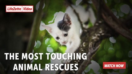 The Most Touching Animal Rescues
