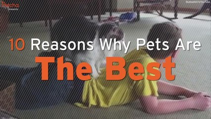 10 Reasons Pets Are The Best