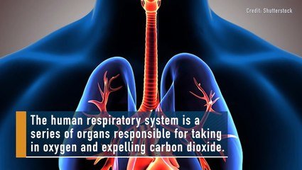 Respiratory System: Fact, Function and Diseases