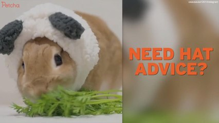 Two Hat-Wearing Rabbits In Japan Can Teach Us About Style