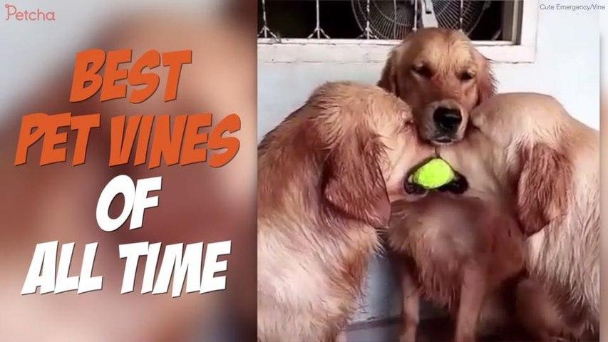 Best Pet Vines