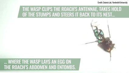Roaches Saves Themselves from Zombification With 'Karate' Kicks