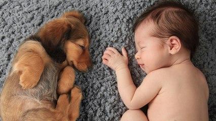 Pets Protect Babies