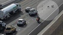 Sechs Hunde sorgen für Chaos auf der Autobahn
