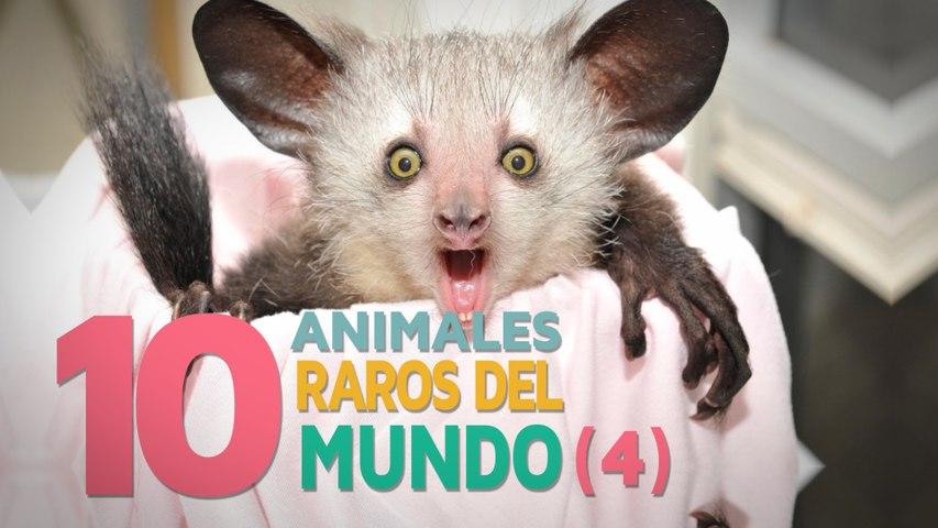 10 Animales raros del mundo   Fascinantes y curiosos 4